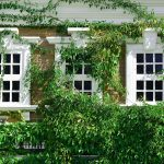 Sash Windows Specialists in Enfield